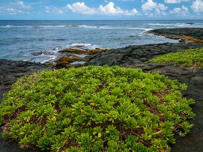 Punalu'u Black Sand Beach Park on the Hawaii Belt Road (Mamalahhoa Highway), Punalu'u, Hawaii (Big Island), HI.