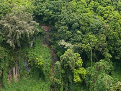 Green Wall, Kipahulu Section, Haleakala NP