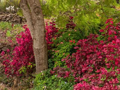 Kula Botanical Garden